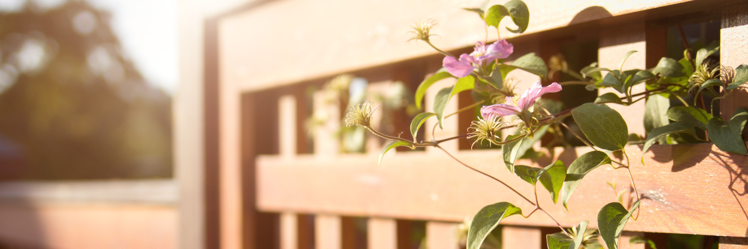 Sunlit wooden fence - Fencing cost